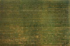 19-Linogravures